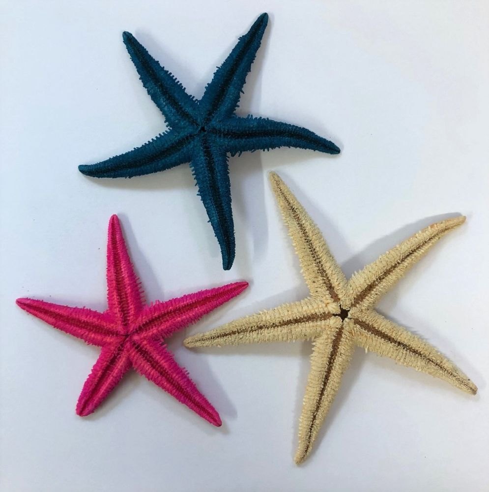 Painted Real Starfish Decorations for Crafts Wedding Coastal Decor Bathroom